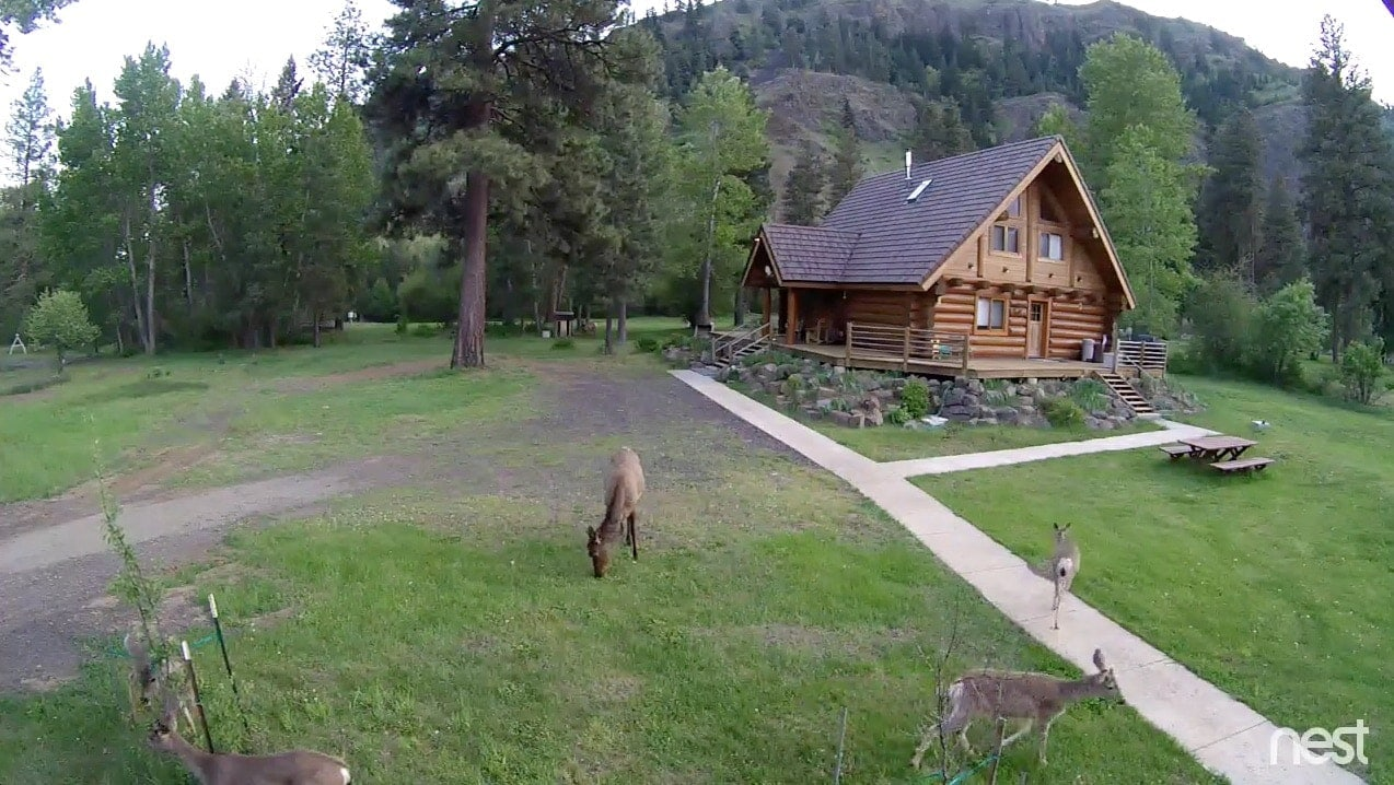 Nest-deer-elk-cabin